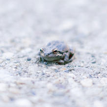 Benji and Brandy/Baja Tree Frogs