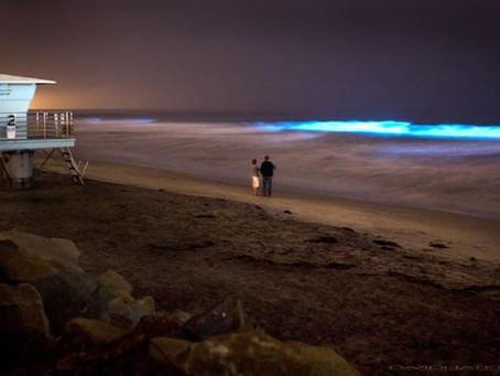 Bioluminescent Red Tide