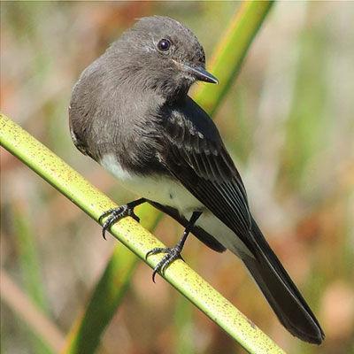 agua-hedionda-lagoon-birds.jpg
