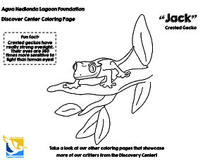 Jack-Crested-Gecko-coloring-page-lagoon-