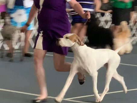 Jared takes another Best of Breed Win