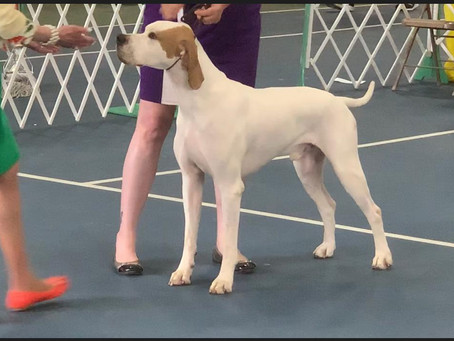 Jared picks up his Second AKC Major