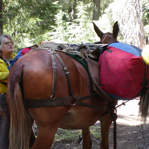 Rare horse assisted packout in 3 Sisters Wilderness
