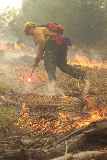 wildland firefighter engine crew member uses a drip torch