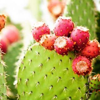 Ingredient Spotlight...Prickly Pear Seed Oil