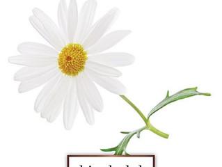 Ingredient Spotlight: Bisabolol