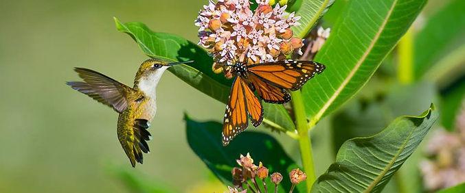 pollinators.jpg