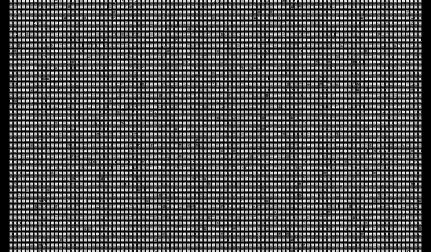 Society 007 193x145cm 145x110cm Pigment Inkjet  2017