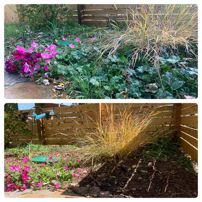 Before and After Garden Bed Maintenance