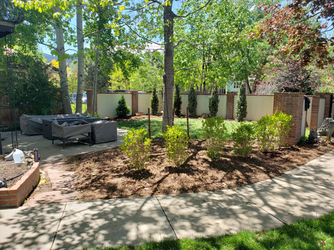 Final Picture Large Tree/Shrub Planting