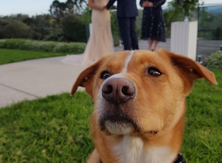 Include your dogs on your wedding day?