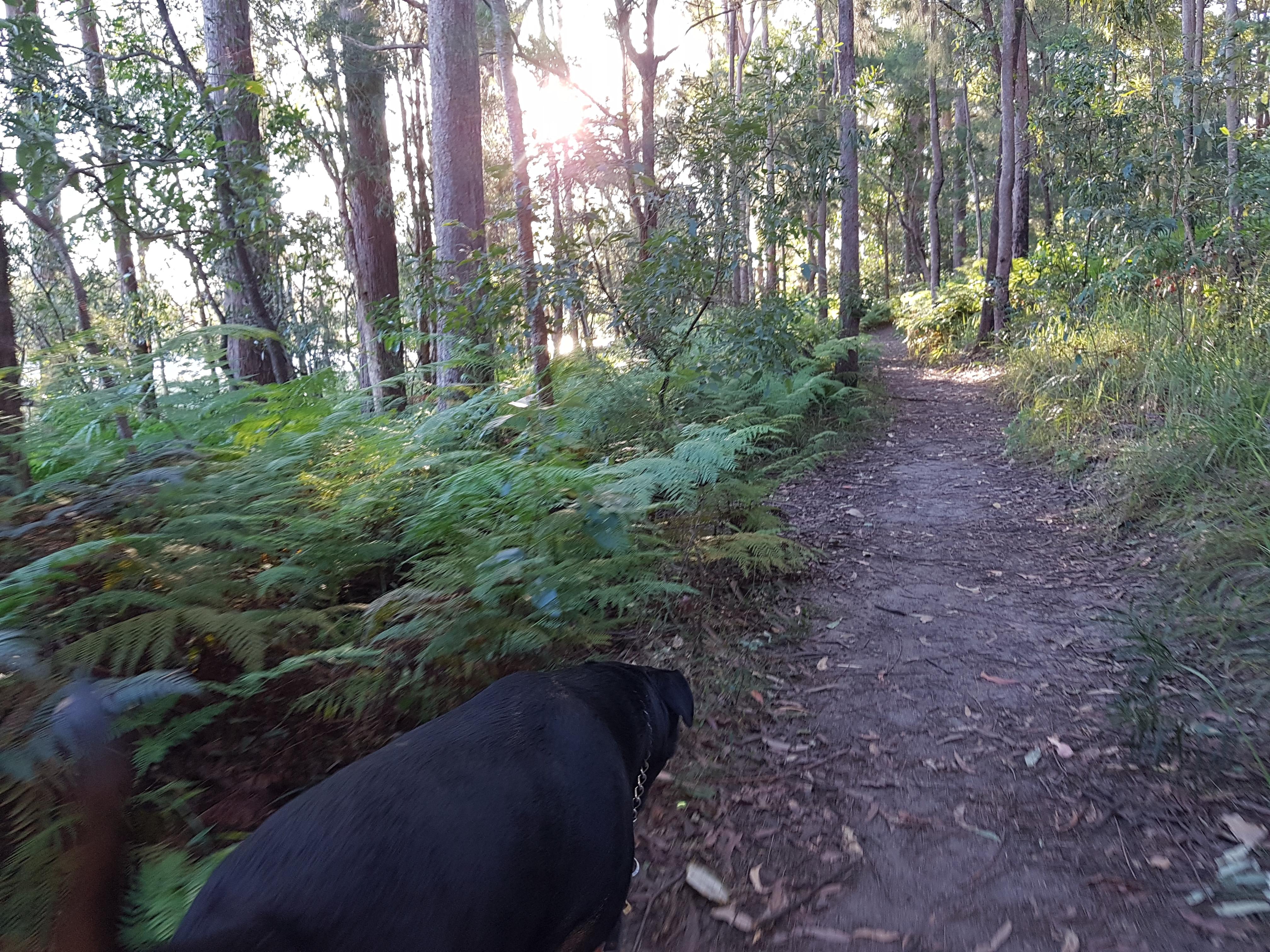 Dog Day Adventure