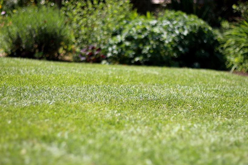6.0 Grass - IMG_8692E (Large).jpg