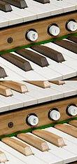 Ivora Natuals & Wood Sharps