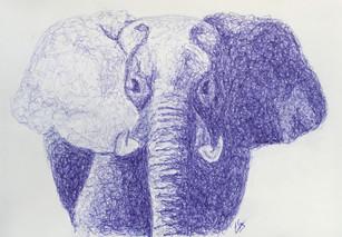 Penolifant
