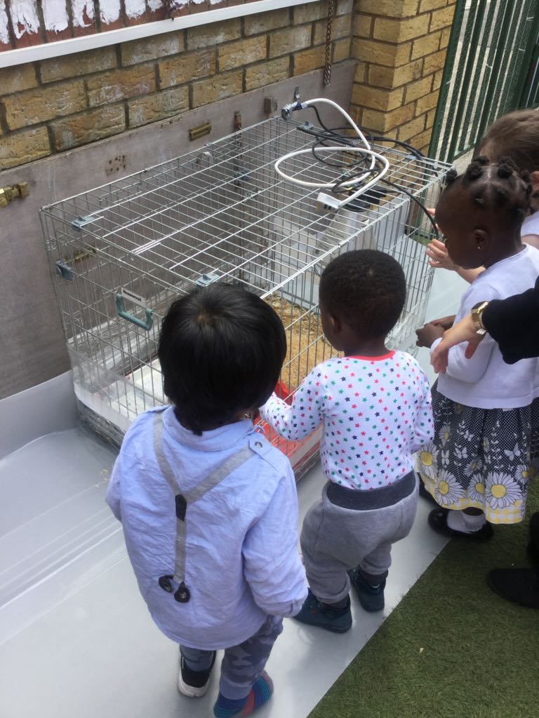 Ducklings in Activity in Sahan Nursery