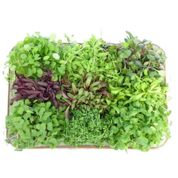 Mix Micro Greens - cut