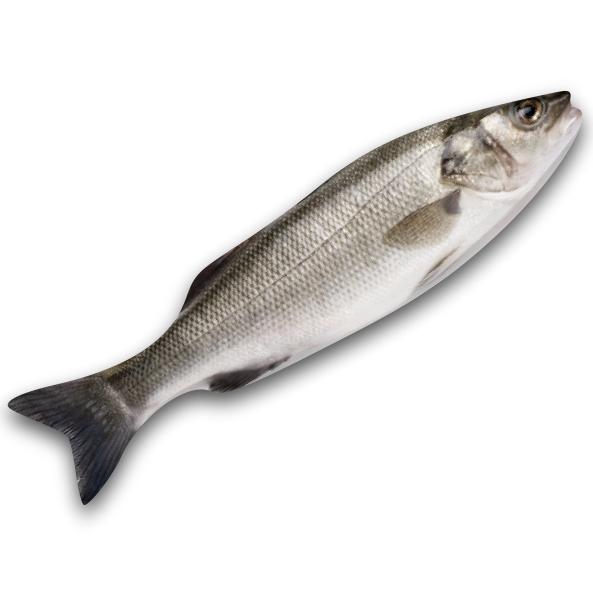 Seabass Fresh