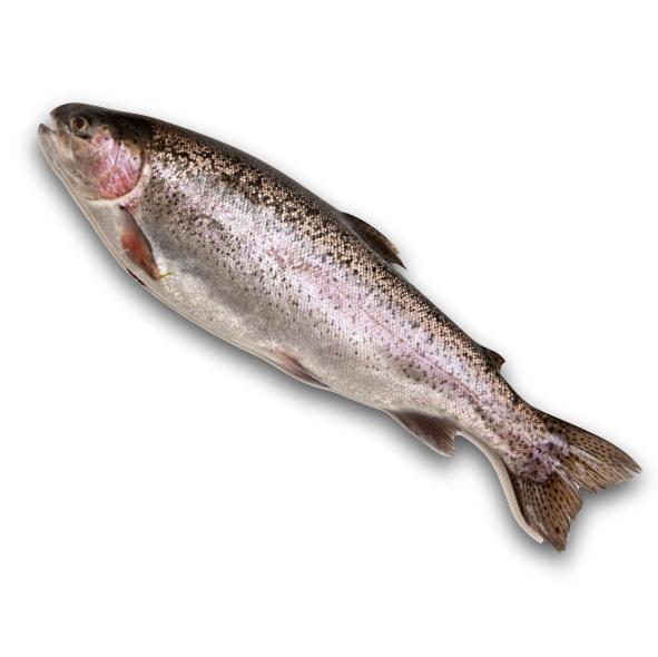 Trout Fresh