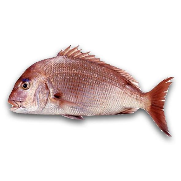Red Sea Bream Fresh