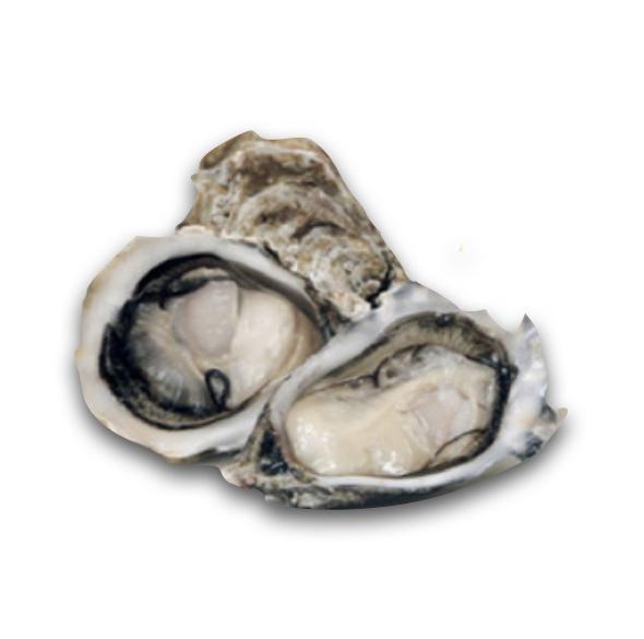 Gillardeu Oysters