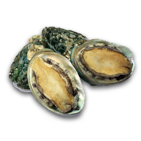 Abalone Fresh
