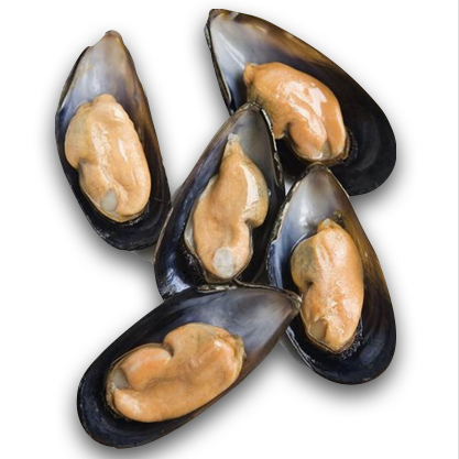 Chile Frozen Mussels (half shell)