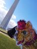 Mr. Fluffy Butt goes to Washington