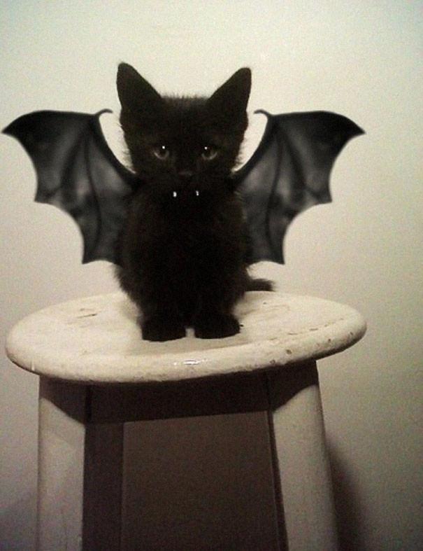 pet-halloween-costume-291__605.jpg