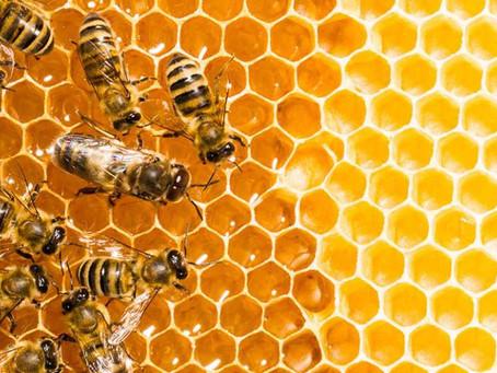 La miel. Su procedencia.