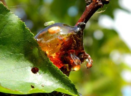 la colmena. Antioxidante natural