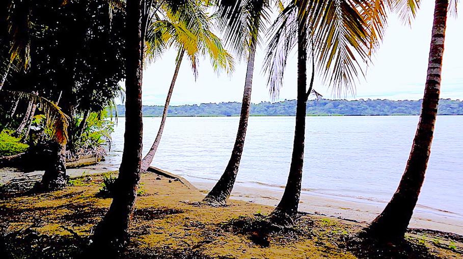 Eco-Lodge B&B in Bastimento, Panama