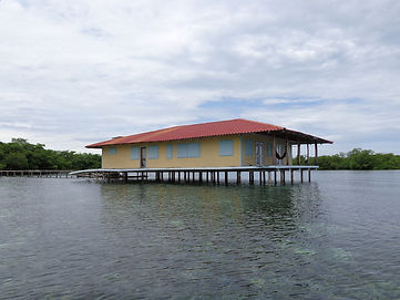 Grande île de 9 acres entourée de récifs coralliens, à Bocas del Toro