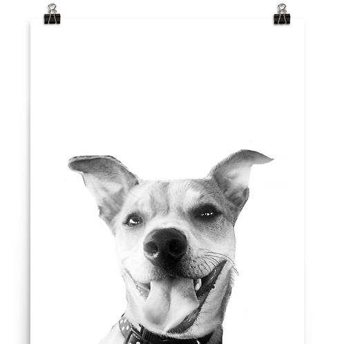 Pop Up Pet Print