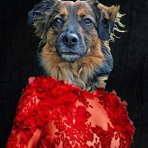 Queen Pet Print