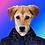 Thumbnail: Create Your Own Pet Print