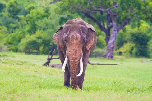 Amazing Tusker Safari Tours