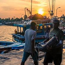 Negombo-Fish-Market.jpg