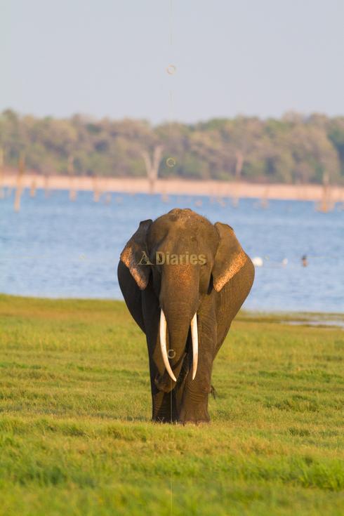 Tusker Safaris