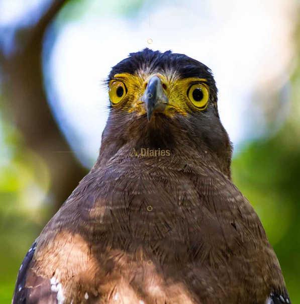 Bird Watching and Wildlife Tours