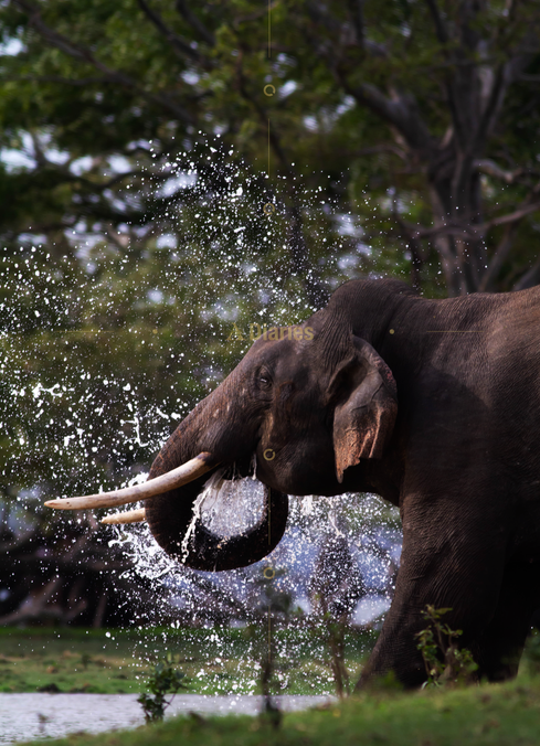 Tusker Pictures