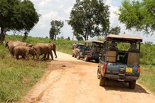 Mahoora Tented Safari Camps.jpg