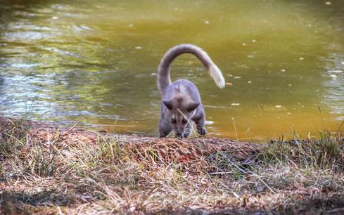 Safari Pics