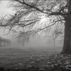 GD Mono foggy village green.jpg