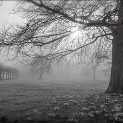 Foggy village green
