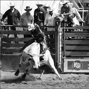Ride him Cowboy !