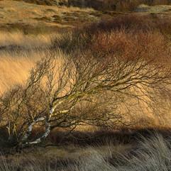 Tree on Winterton Dunes