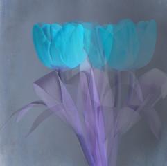 4 Inverted Tulips.jpg