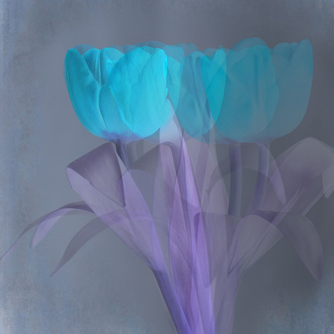 Inverted Tulips