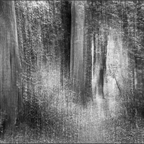 Somerton Woods
